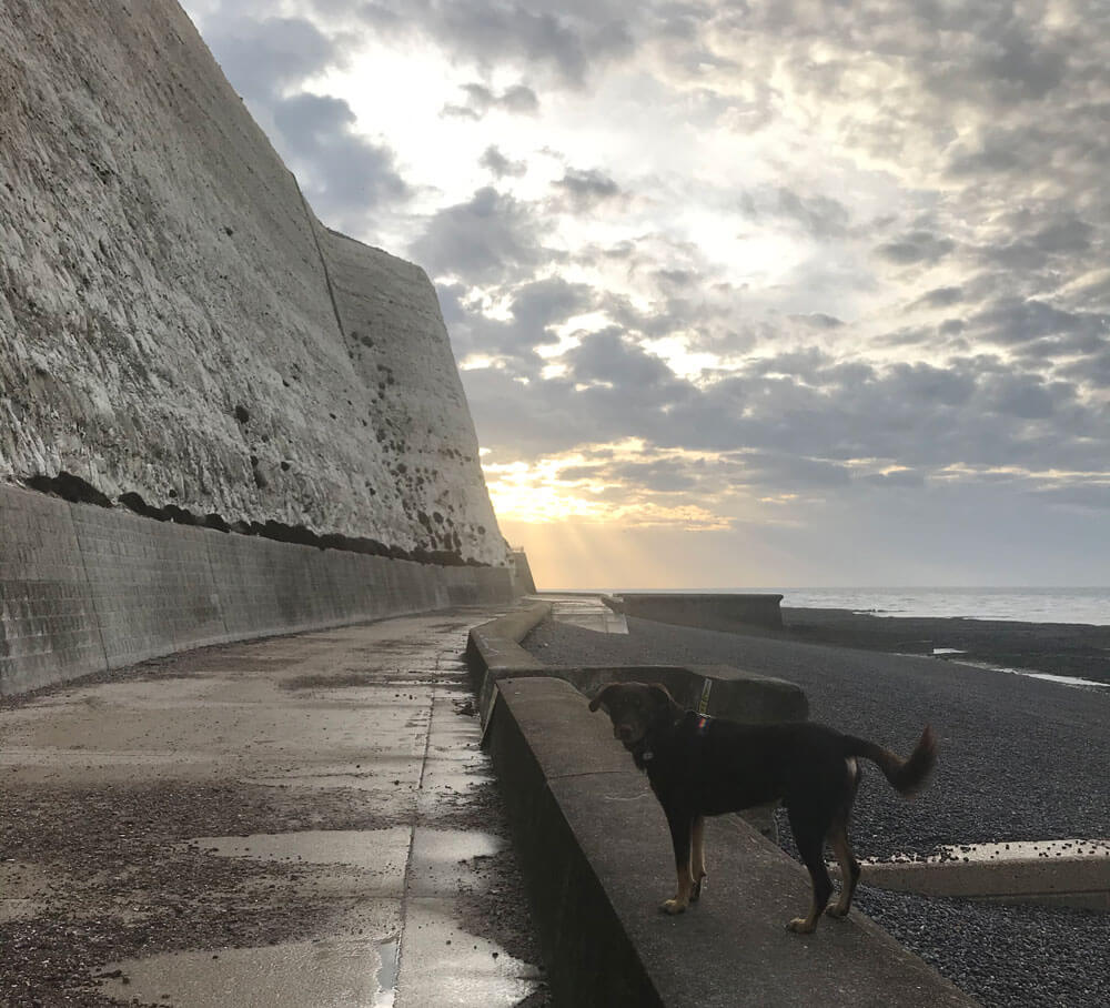 the worlds best dog, on wall next to a beach, big white cliffs and sunshine in the background